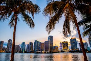 Miami skyline between two palm trees